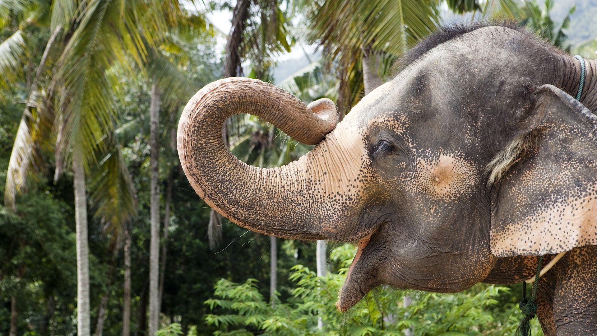 új elefánt érkezett a szegedi vadasparkba