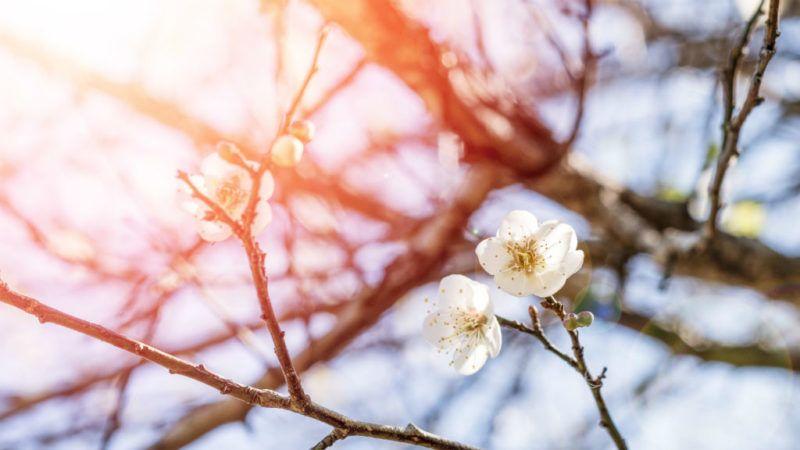 tavasz napsütés reggel