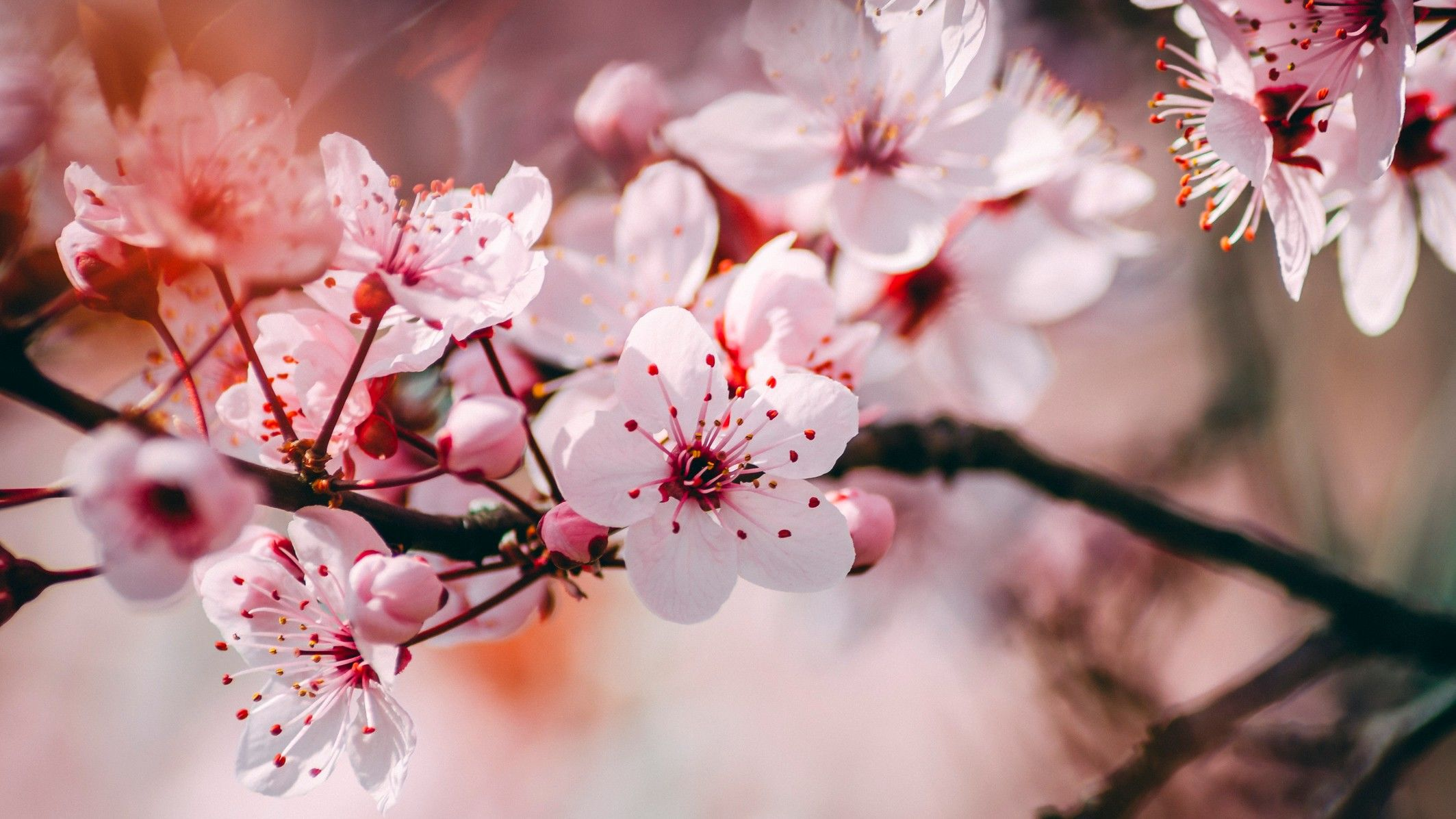tavasz