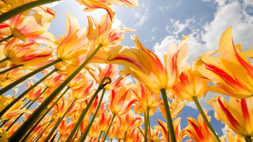 A tavaszi napfordulóval kezdődik az asztrológiai újév (fotó: Getty)