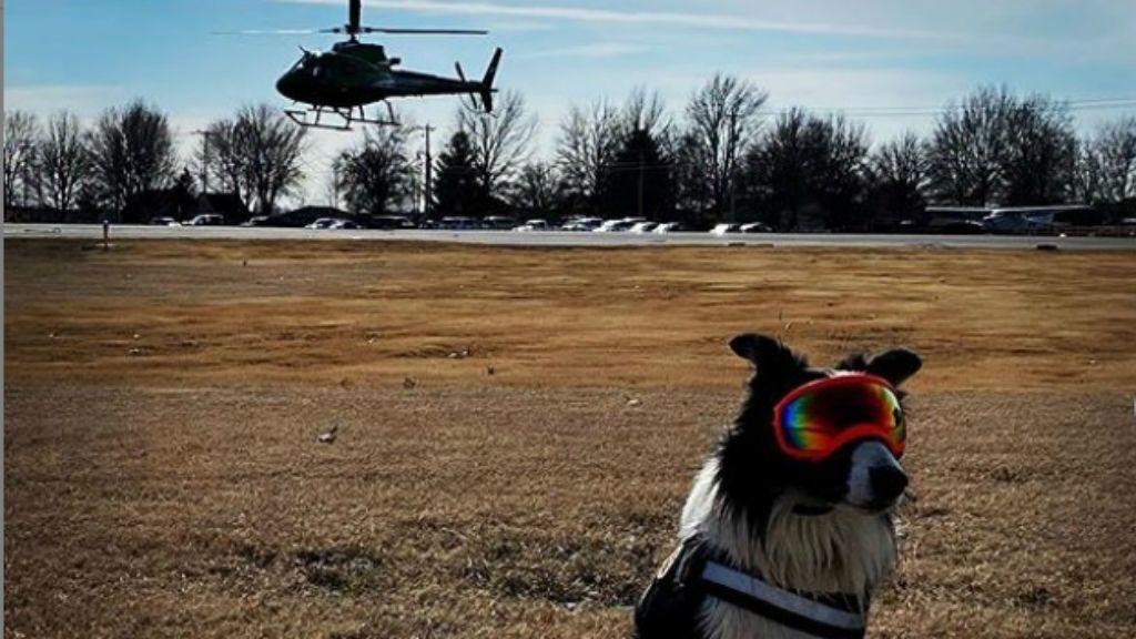 Kutya segít a reptér kifutópályáinak megtisztításában a madaraktól - Instagram