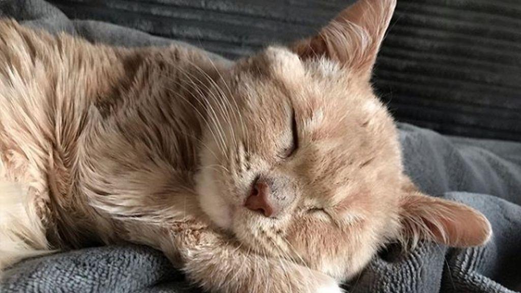 Munchie macska