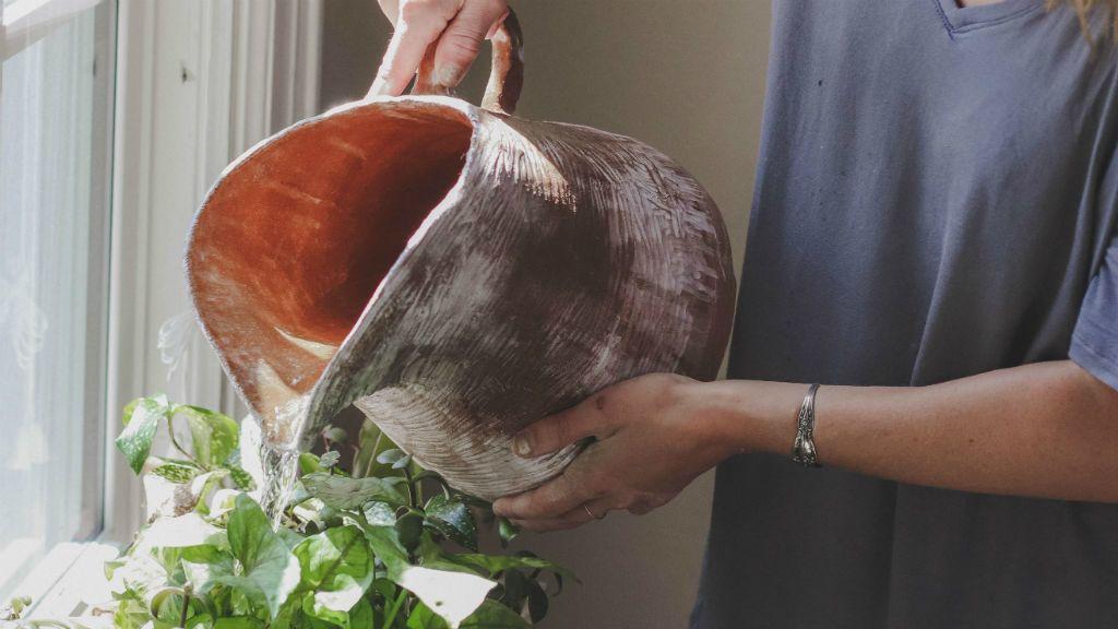 Nem tűnt fel a nőnek, hogy évekig műanyag növényt locsol - Fotó: Cassidy Phillips on Unsplash