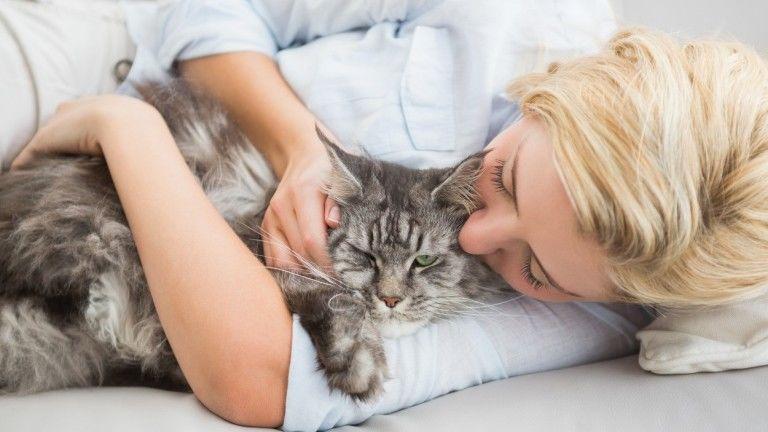 A benti cicákat is kezelni kell férgesség ellen