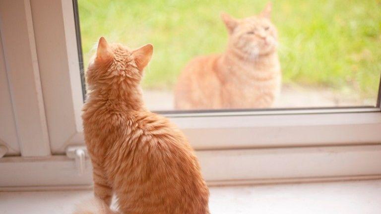 A kijárós cicákat jobban fenyegeti a férgesség, de a bentieknek is kell a védelem
