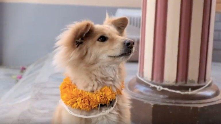 nepál fesztivál kutya ember