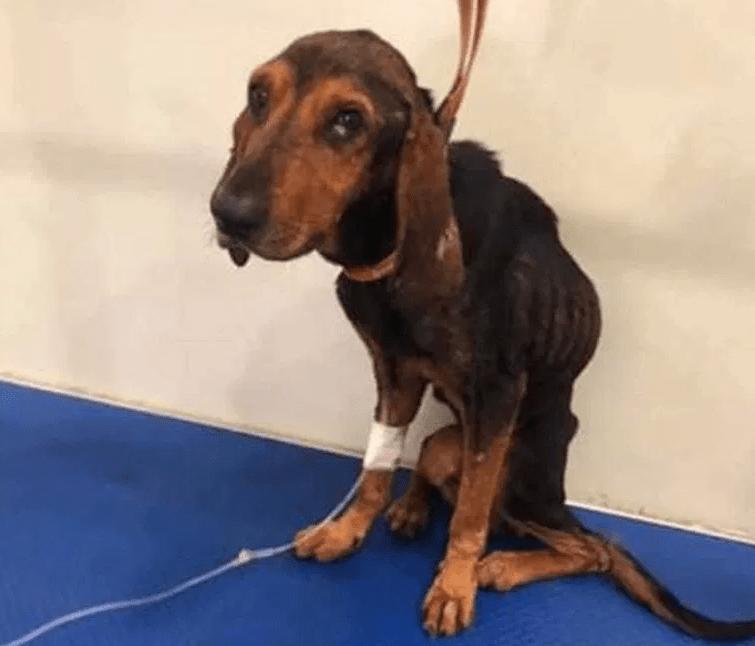 kutya életmentés örökbefogadás