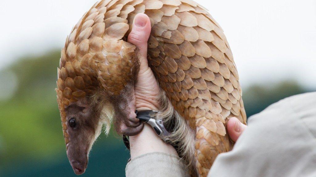 Cuki állatkák hordoznak olyan vírust, ami a világban tomboló Covid-19-hez köthető