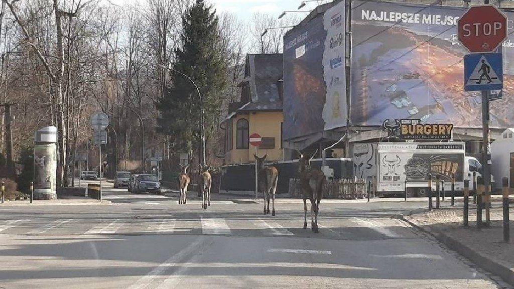 Zakopane lakói az utcán kóborló állatokat fotózzák (Olvasó fotója/Naszemieszto Zakopane)