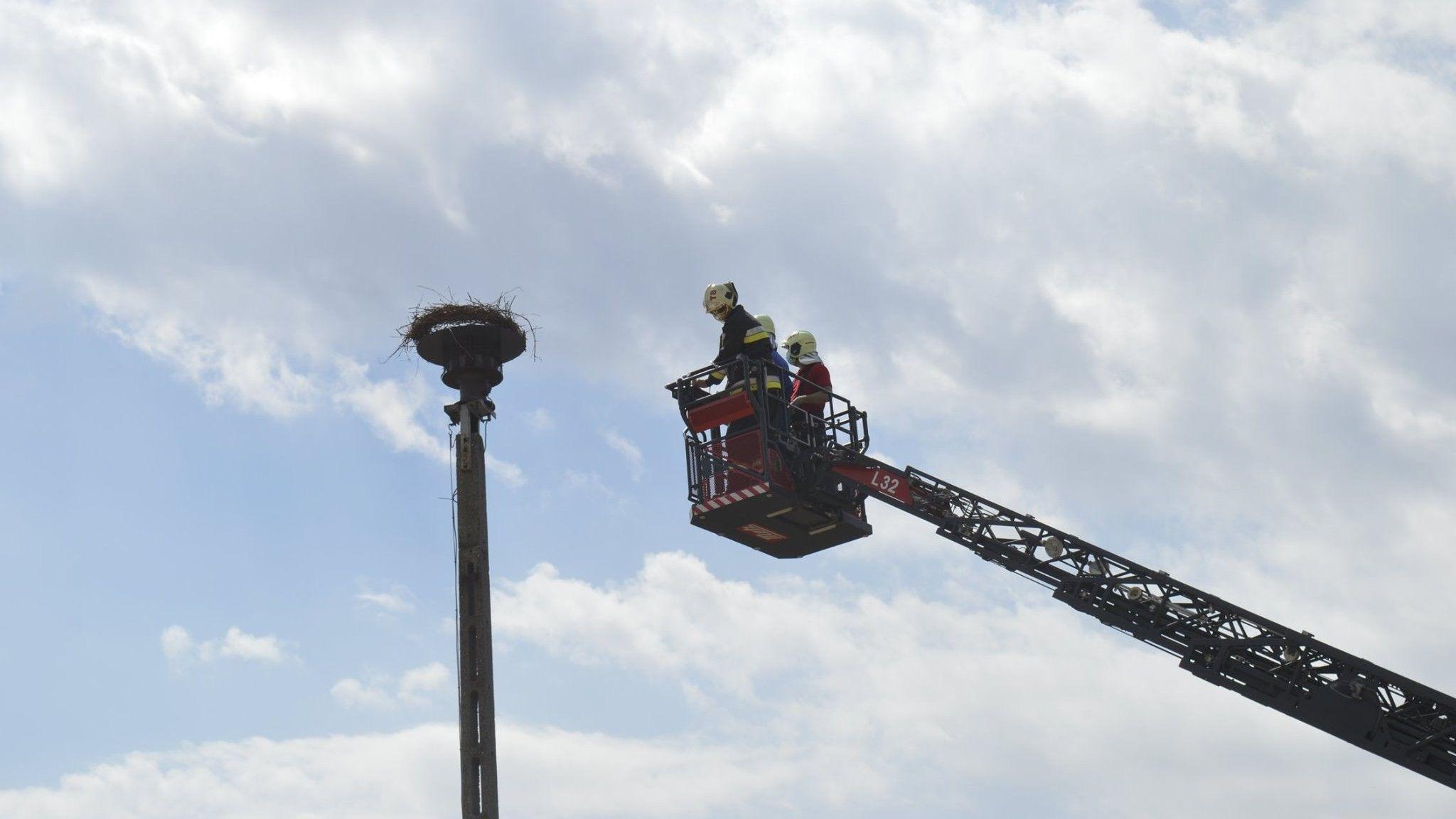 A fészek rögzítését a tatabányai emelőkosaras tűzoltógépjárművel végezték.