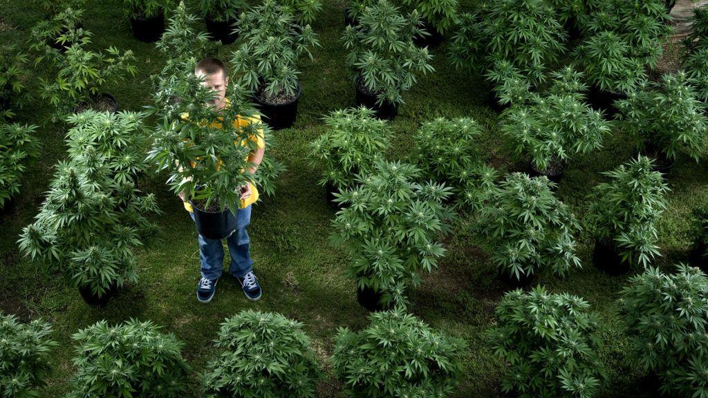 Mi ez a 420-azás, honnan jön ez az egész?