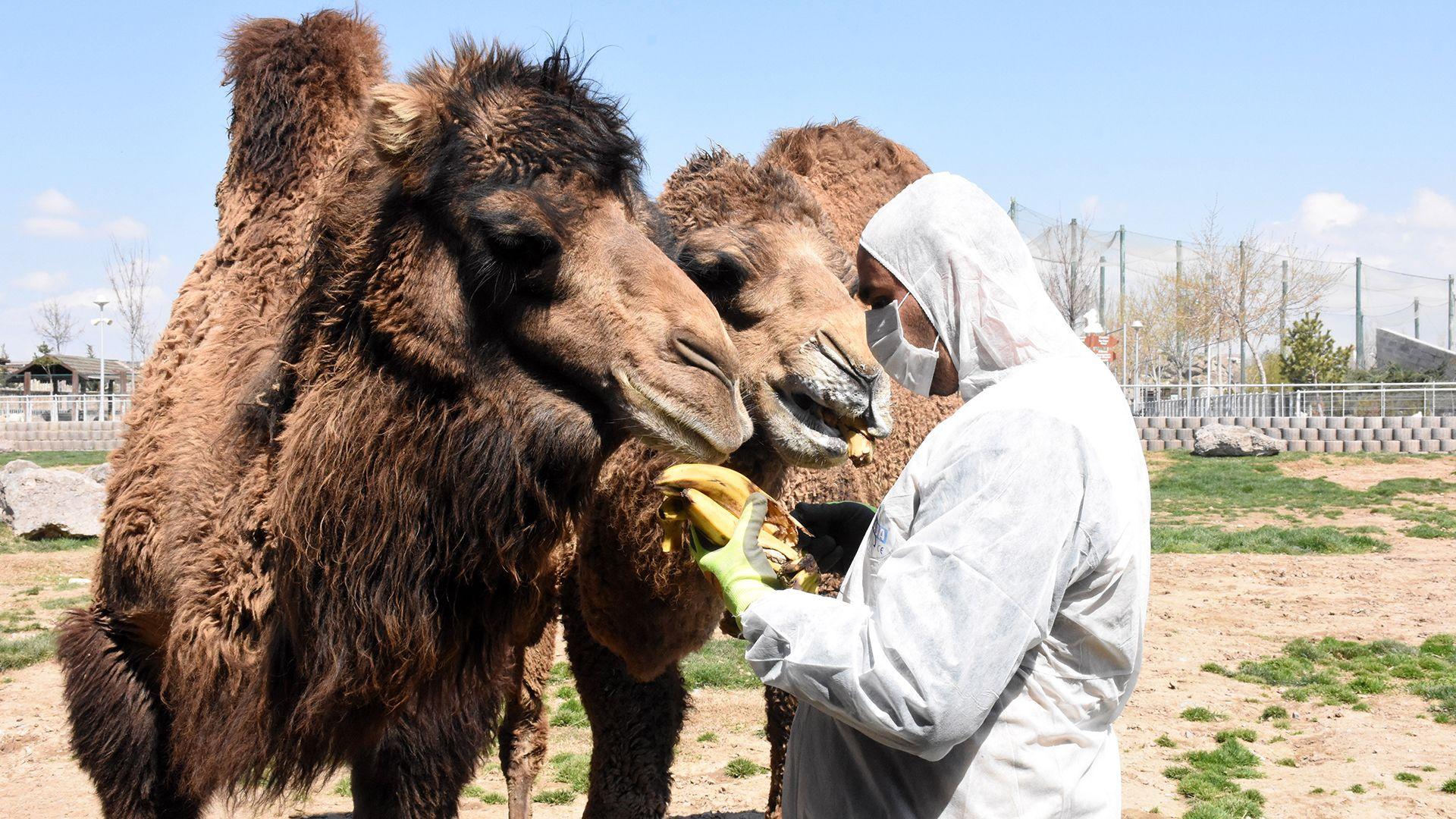 A német állatkertekben levághatják az állatokat a járvány miatt