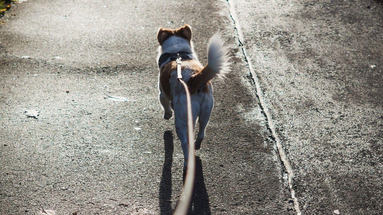 kutya kutyasétáltatás