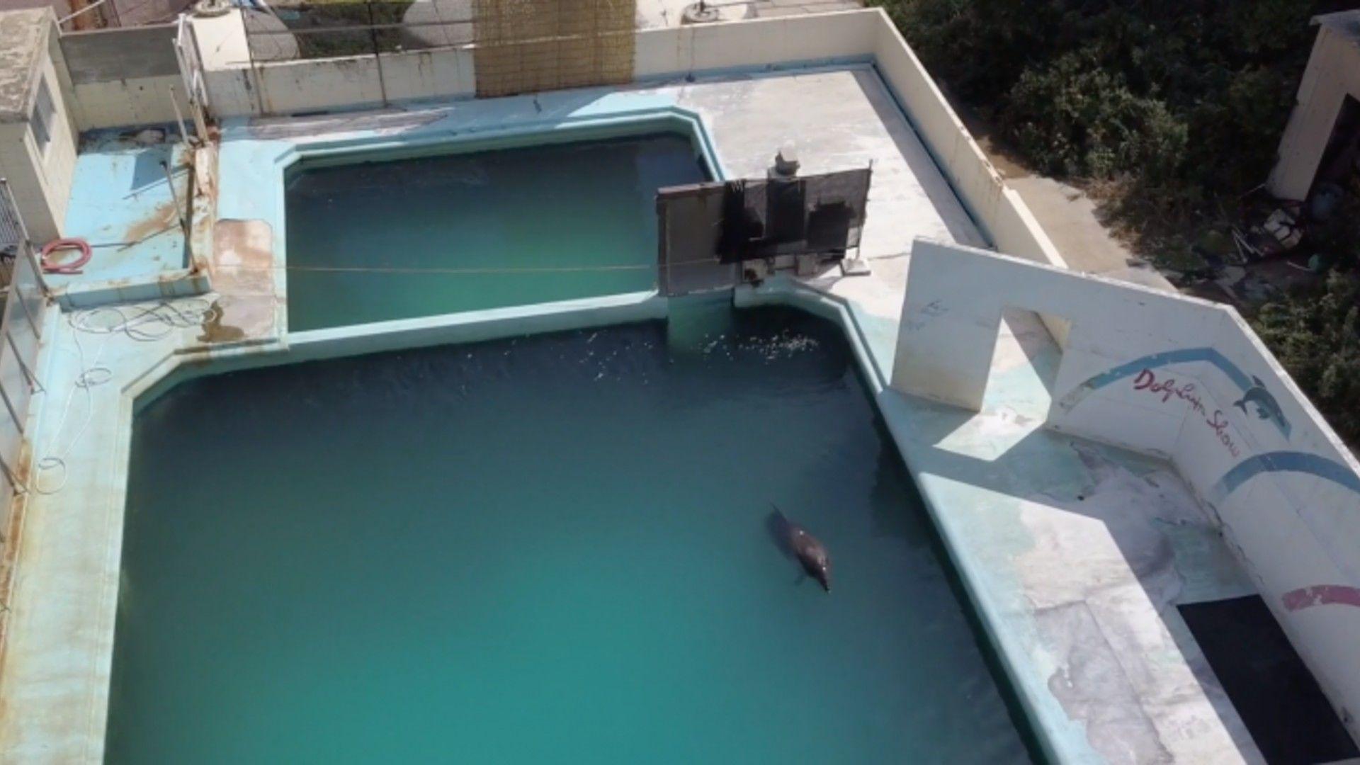 A világ legmagányosabb delfine, Honey - Kép forrása: Twitter