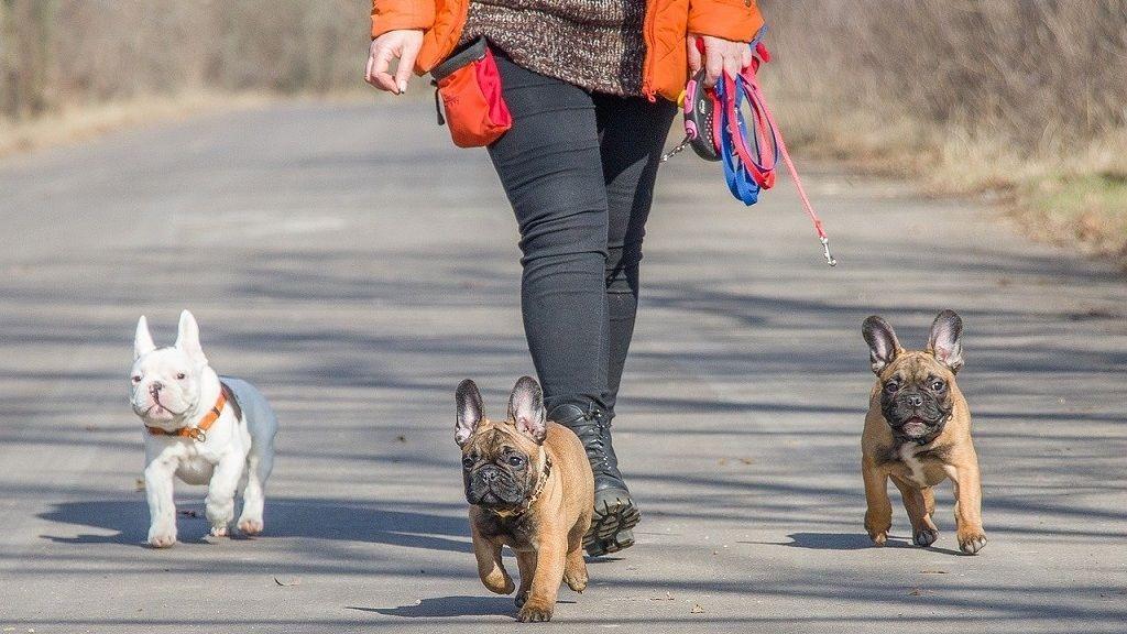Önkéntes kutyasétáltatókat keres a II. kerület