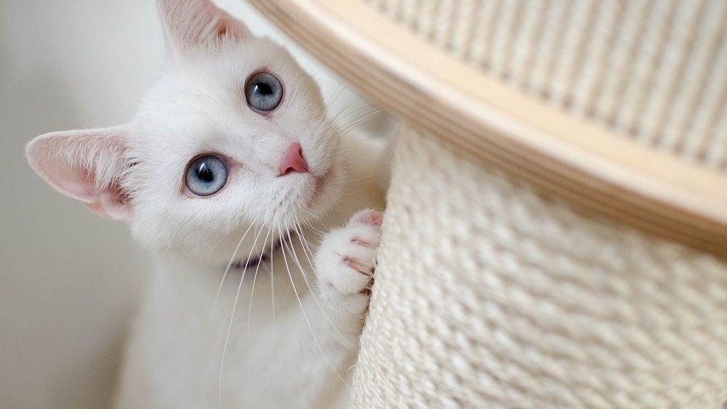 Megszenvedter a macska a magányt