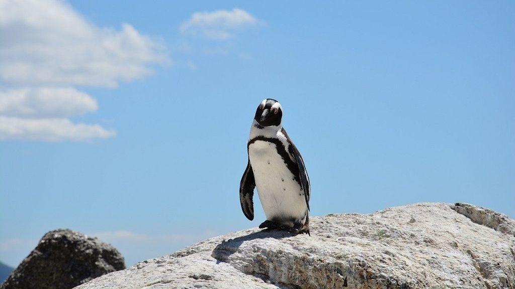 Magányos pingvinekről készült fotóért rajong most az internet