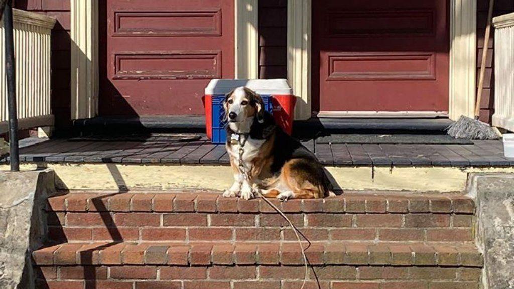 Sparkle kutya ül a lépcsőn.