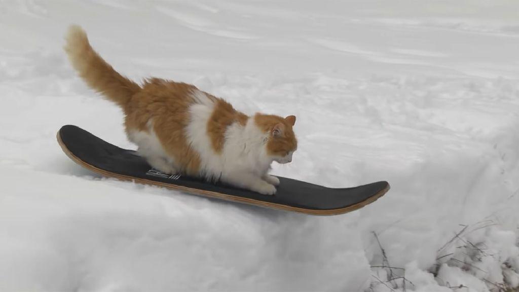Snowboardozó macska