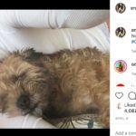 Mihalik Enikő a karantén idején így tölti a hétköznapokat a kutyájával