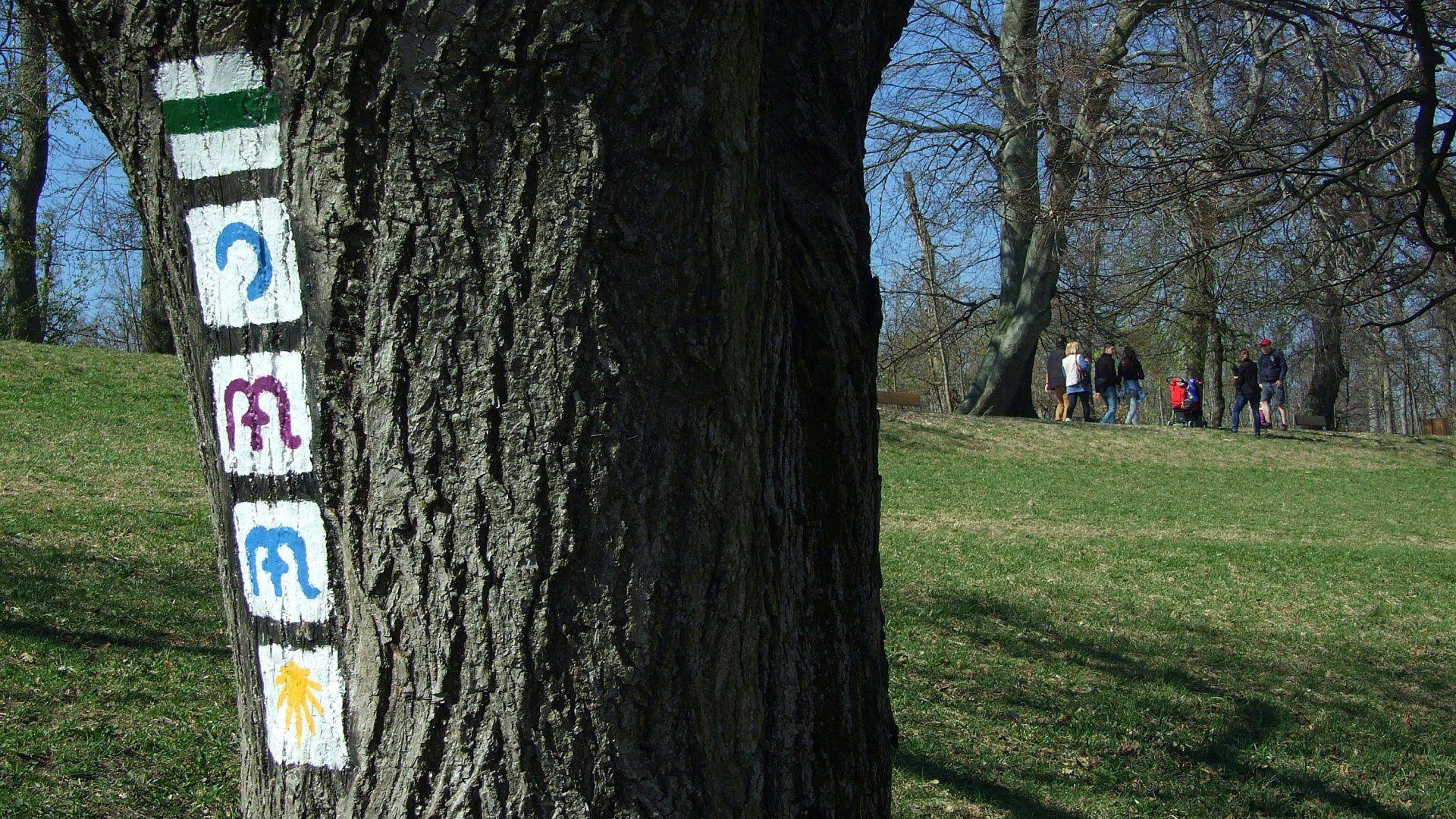 A járvány előtt készült képen egy öreg fa kérgére festett, karbantartott turista-jelzések láthatók a Normafa közelében, egy kiépített turistaút szélén (Fotó: MTVA/Bizományosi: Jászai Csaba)