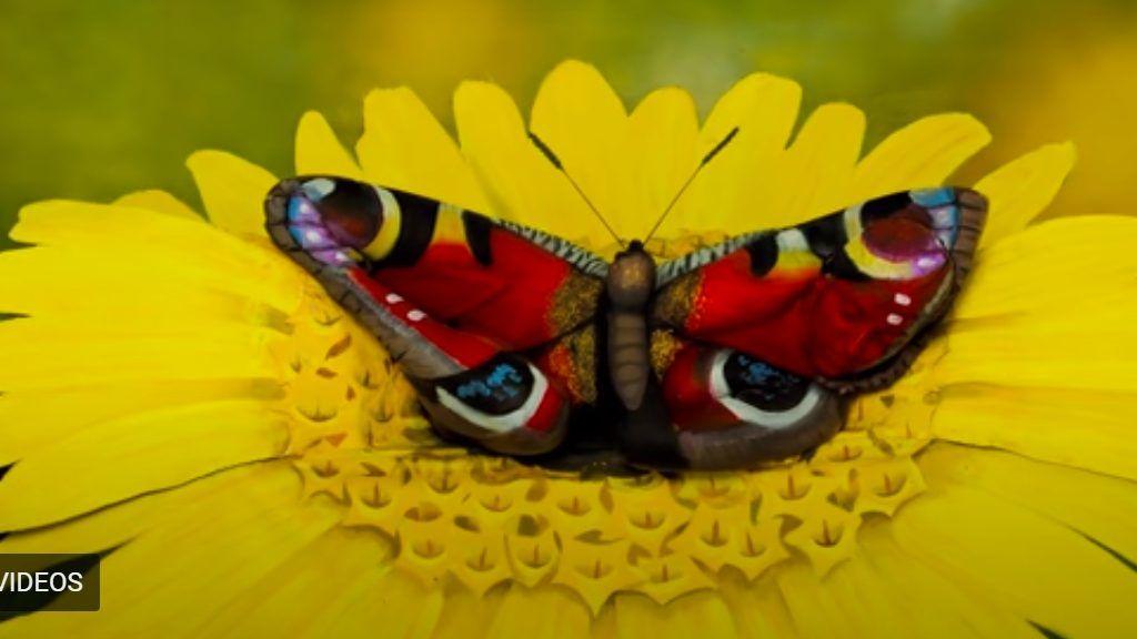Első pillantásra ez egy pillangó. Másodikra is. Te látod, mit rejt a kép valójában? Forrás: Youtube