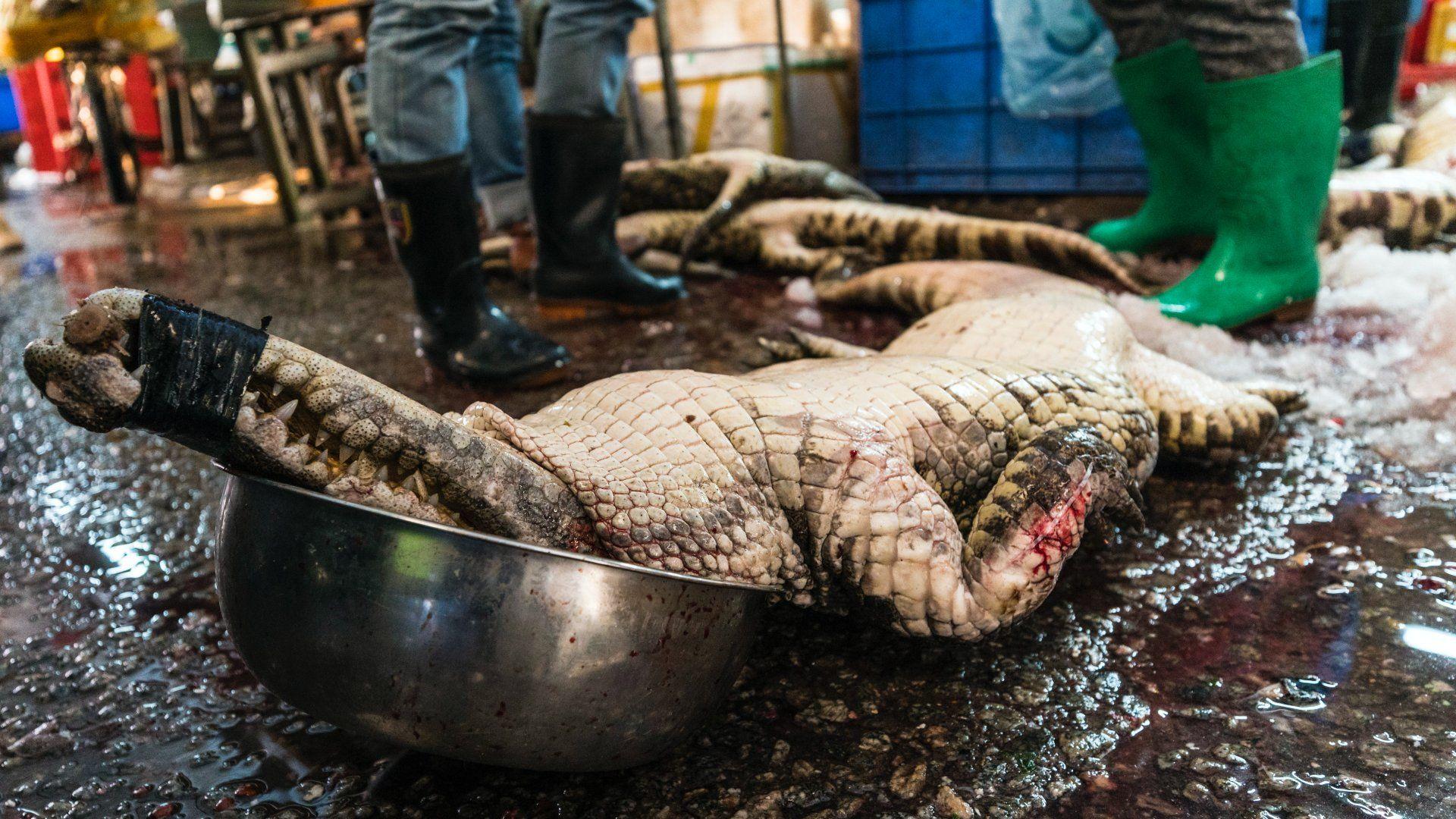 Eladásra szánt krokodil a kínai Cukidzsi halpiacon a kínai Kuantung tartományban lévõ Kuangcsouban 2018. január 22-én