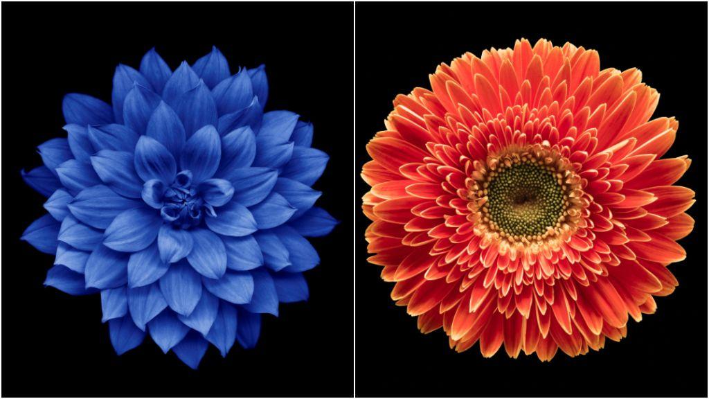 virágok személyiségteszt