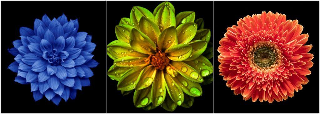 Melyik virágot választod? S vajon mit mutat meg az előző életedből?