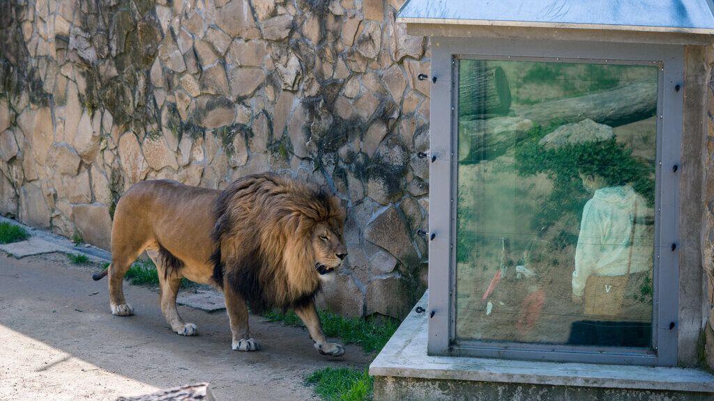 Újra nyit a pécsi állatkert