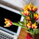 Milyen kár, hogy olyan rövid a tulipán szezonja!