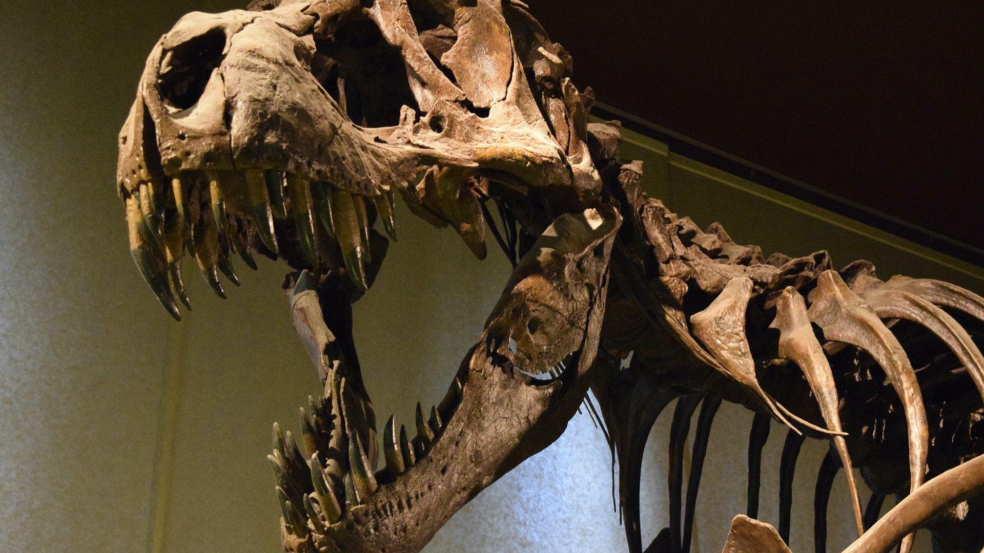 dinoszaurusz csontváz