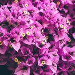 Igazából nem is a virága az, ami színes.