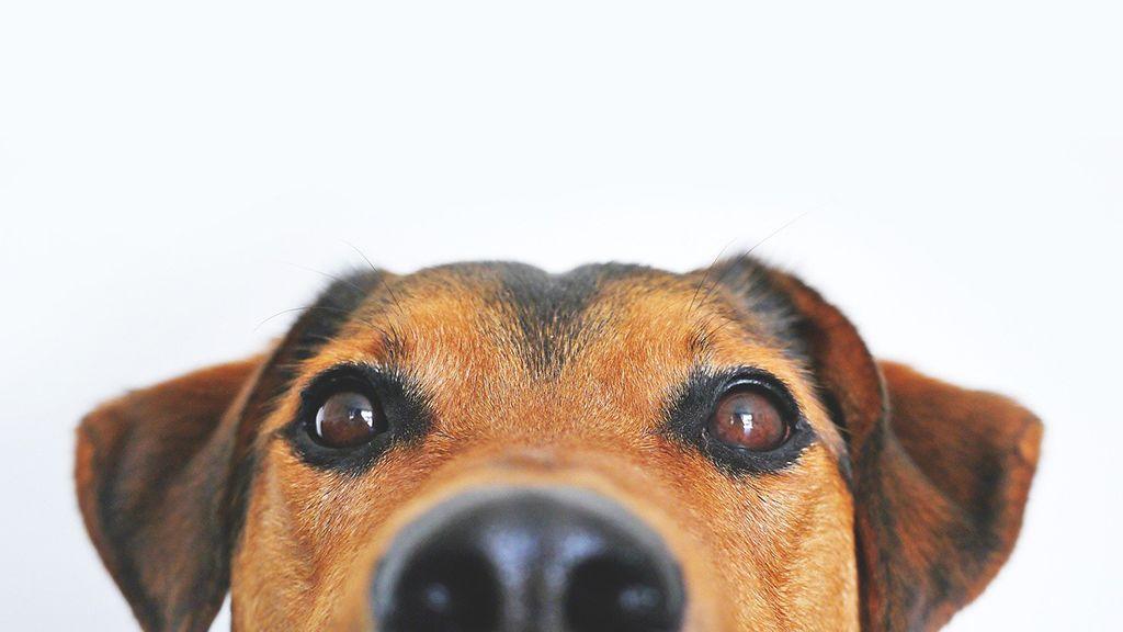 A kutyatartás hatalmas felelősség.