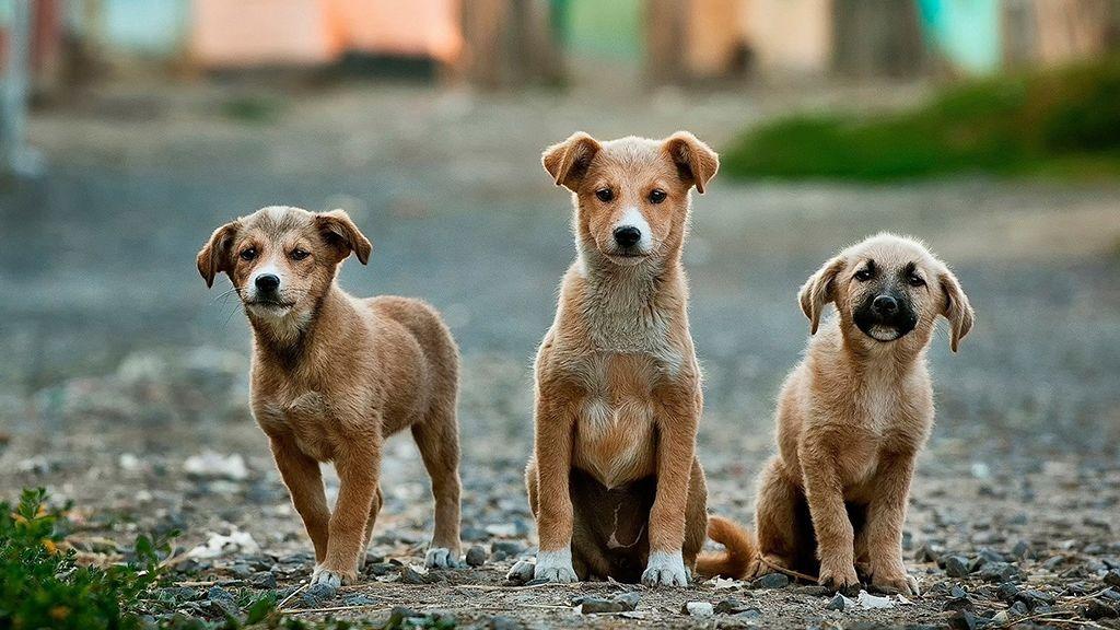 Tele vannak a kutyamenhelyek, alig működik az állatvédelem.
