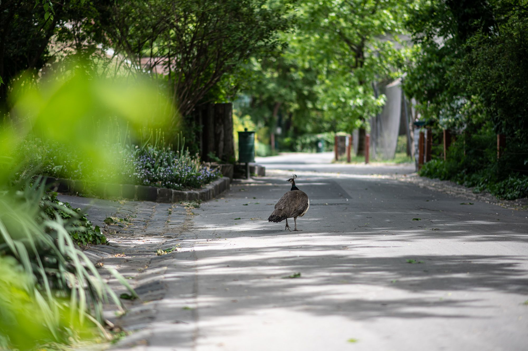 A járvány miatt kiürült Budapesti Állat- és Növénykert