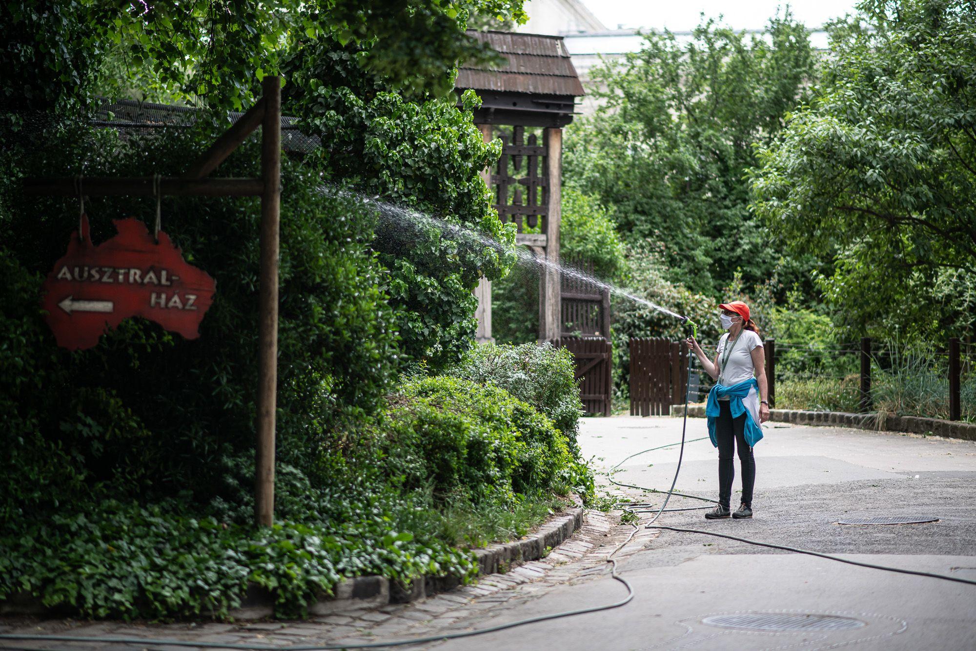 Karbantartás a járvány miatt üres Budapesti Állat- és Növénykertben