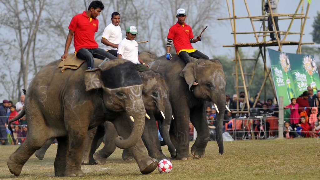 Nagy elefánt, nagy foci