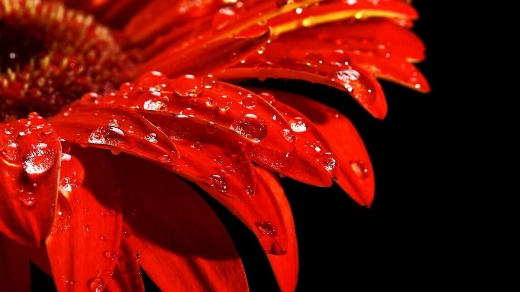 Esőcseppek játszanak a virágszirmokon.