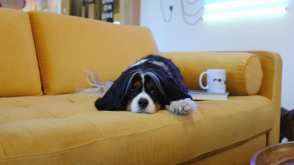 A legmakacsabb foltokat is ki lehet szedni a kanapéból!
