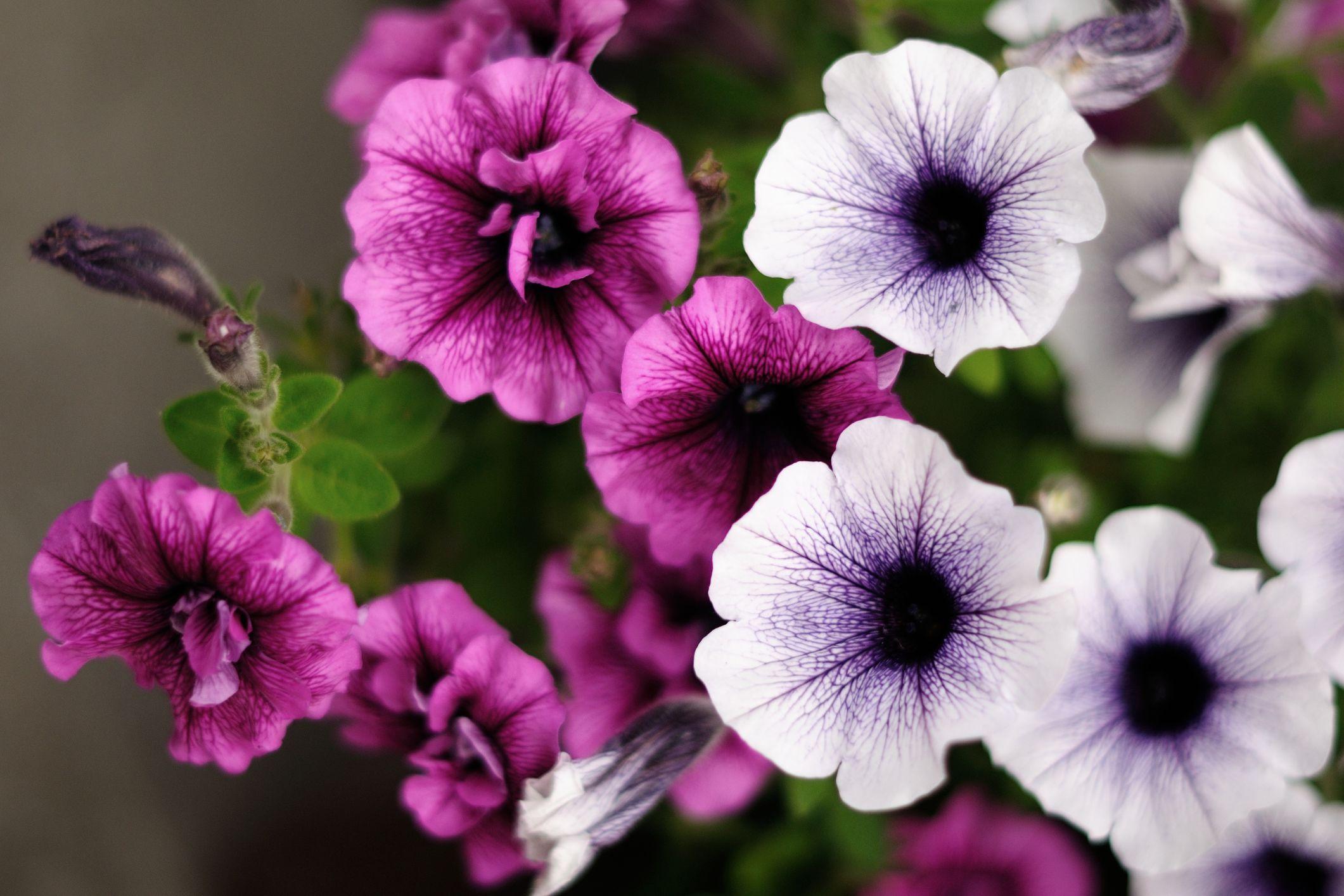 A lilás árnyalatok a legnépszerűbbek
