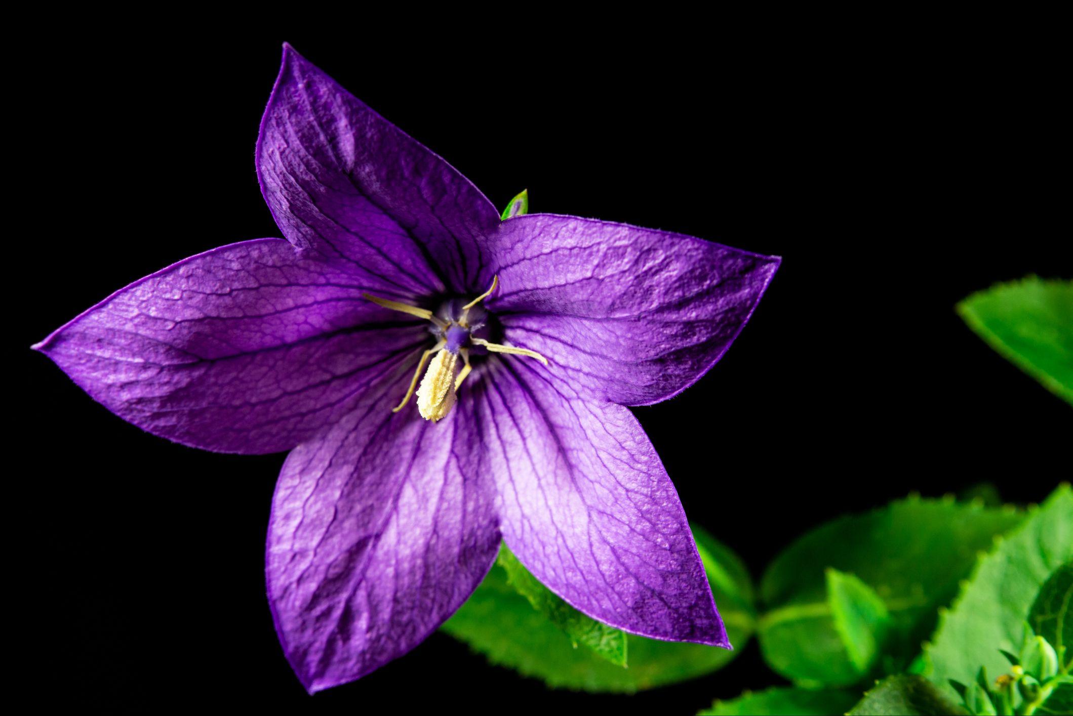 A liláskék mellett létezik teljesen lilában