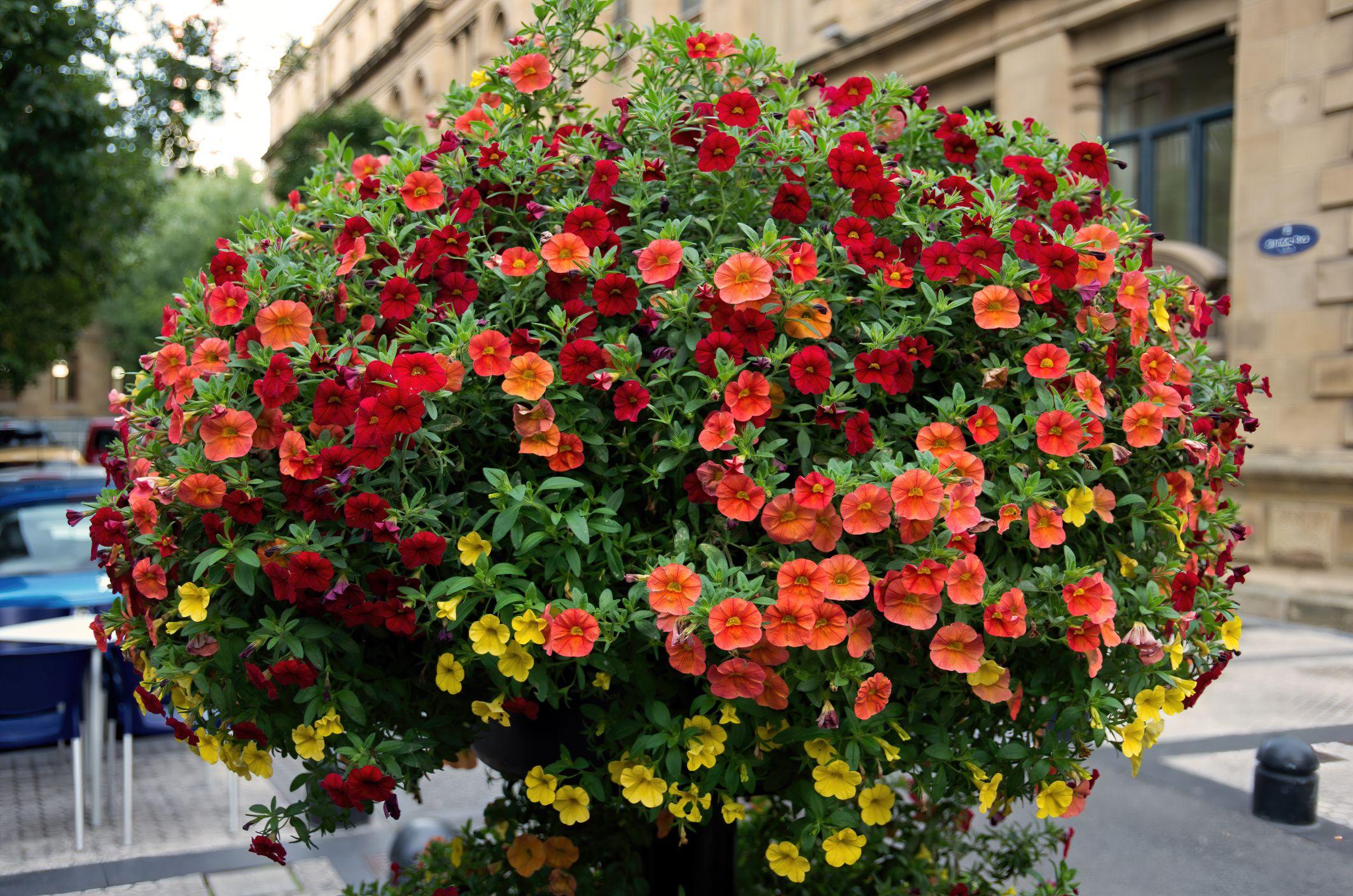 Bőségesen virágzik