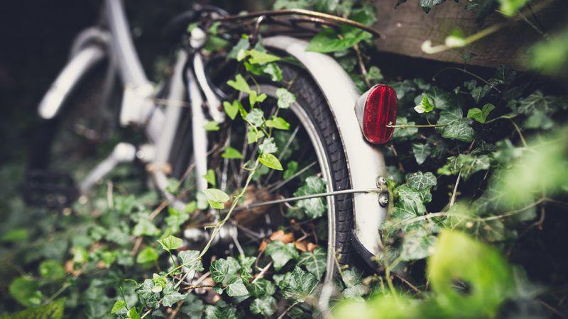 Elhagyatott kertben áll a bicikli