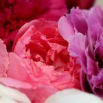 Pünkösdi rózsa esküvőre