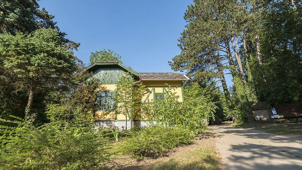 A Gödöllői Arborétumnak nagy a fafaj gyűjteménye.