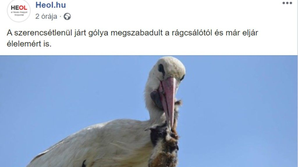 Szájzáras gólya