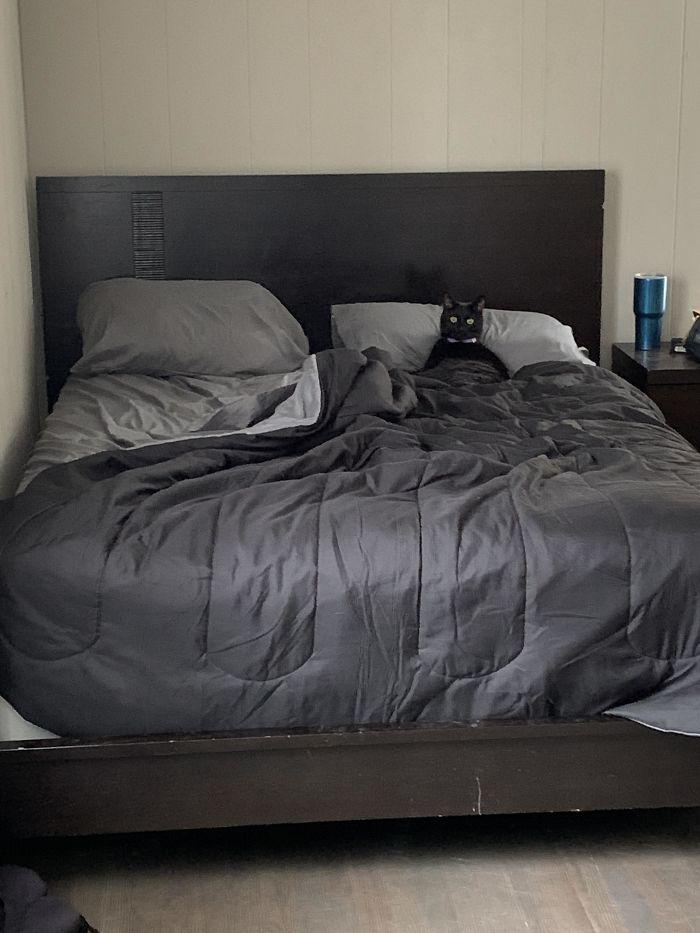 Egy házi kedvenc az ágyban