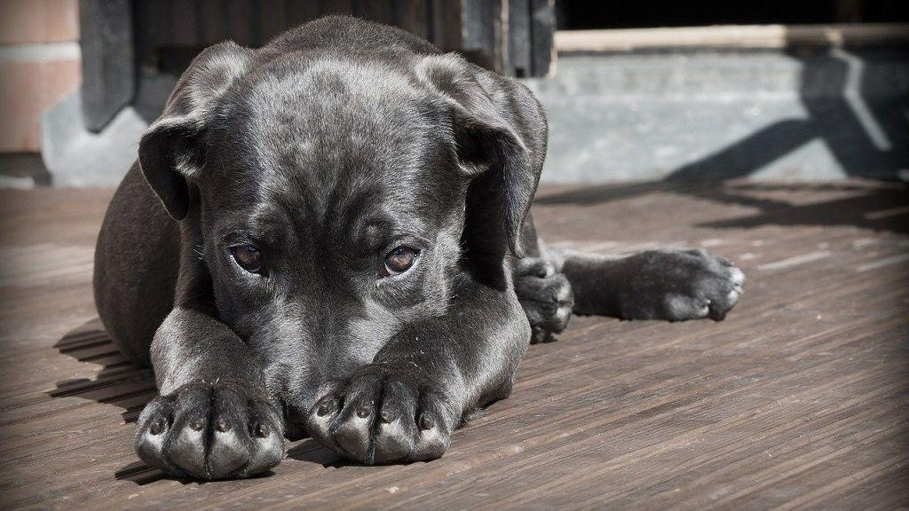 3 hónapig várta a kórházban hűségesen a koronavírusban elhunyt gazdáját a kínai kiskutya.