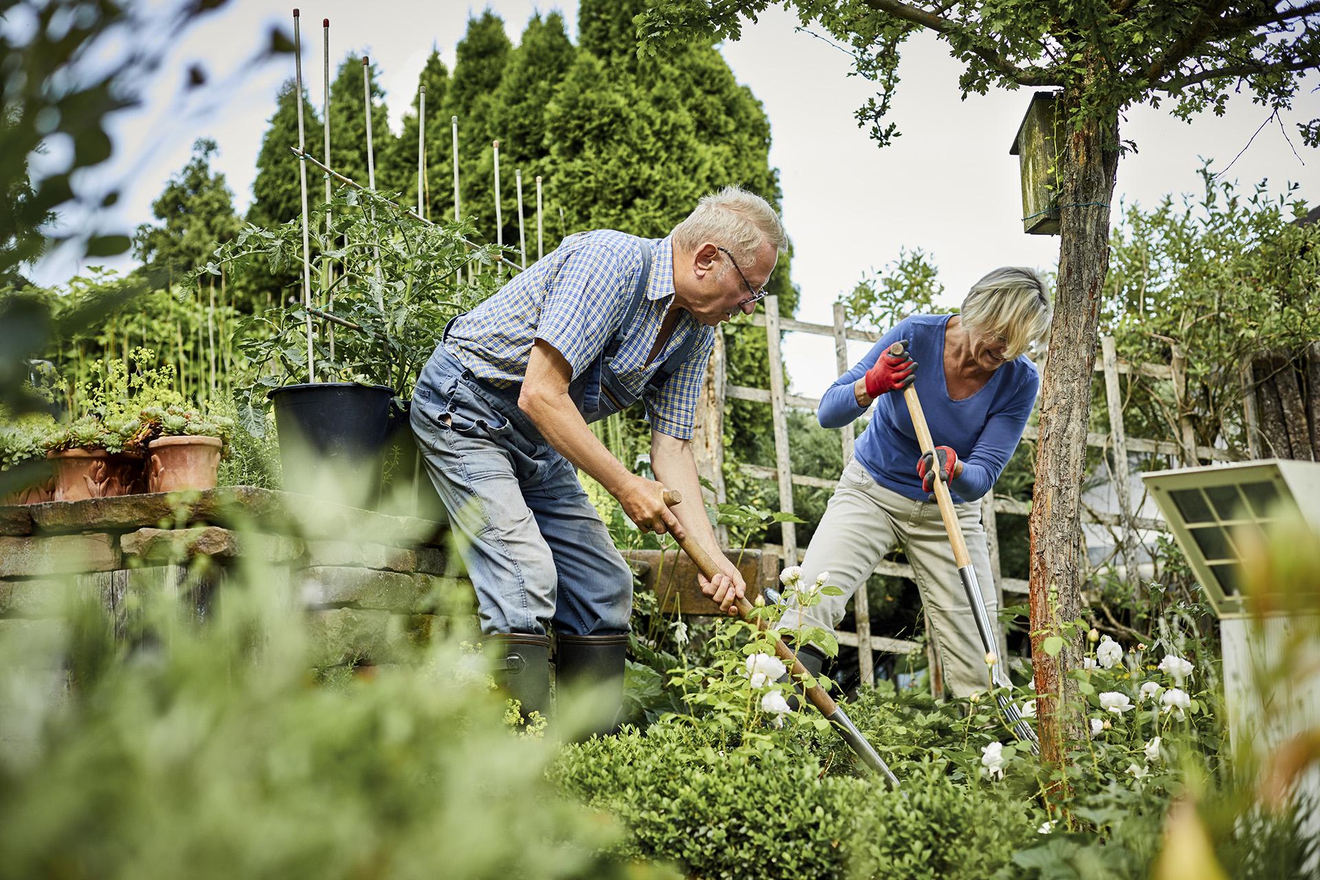 Idős házaspár kertet gondoz